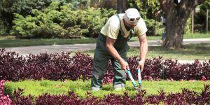 Curso de mantenimiento de parques y jardines